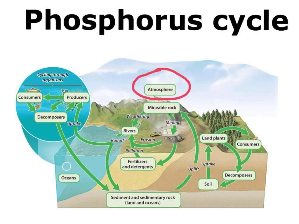 phosphate cycle-study on internet